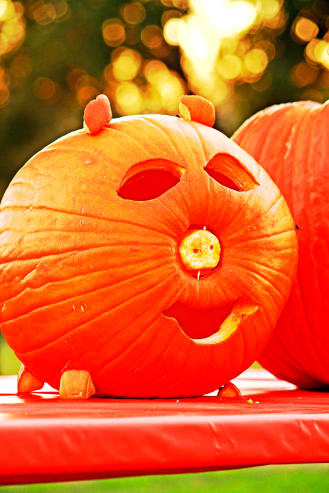 Jack o Lantern Carved Like a Cat